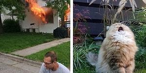 30 самых странных и смешных фото с кошками: вы не сможете сдержать смех!