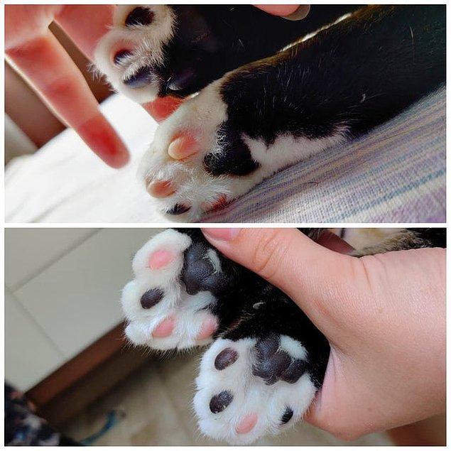 """4. """"Kedimin patilerinde farklı renkler var."""" 😍"""