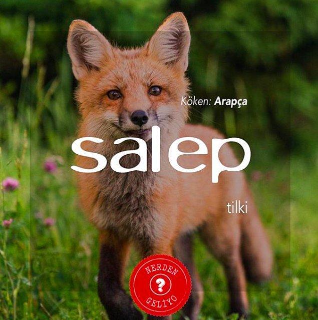 15. Salep