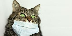 Российские ученые разрабатывают вакцину от коронавируса для животных