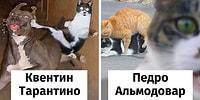 Самые смешные пародии от кошек на известных режиссеров (21 фото)