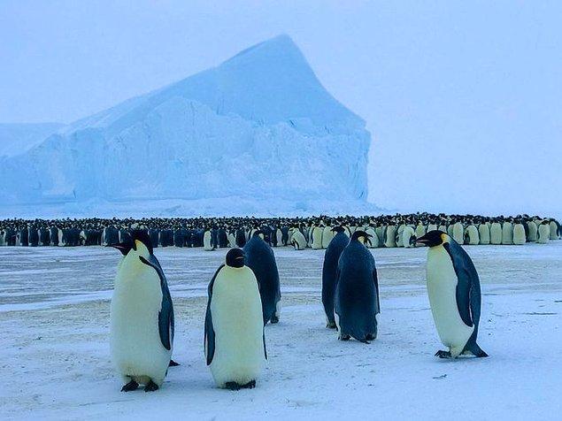 """""""Geçen yıl Yamal Yarımadası'nda geyikleri beslemiştim, bu yıl penguenleri gördüm. Kutup deneyimini tam anlamıyla yaşamış olmak için ihtiyacım olan tek şey kutup ayısı görmek ve ondan kaçmak."""""""