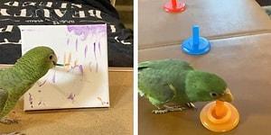 Женщина научила попугая амазон рисовать, играть в баскетбол и многому другому