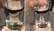 Вы будете смеяться вслух! 20 самых смешных искаженных фотографий животных