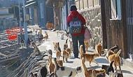 14 животных-попрошаек, которые будут надоедать вам каждый день в той или иной стране