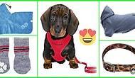 Evcil Hayvanlarınızın Tarzına Tarz Katacak 2020 Trendi 19 Tasma ve Kıyafet