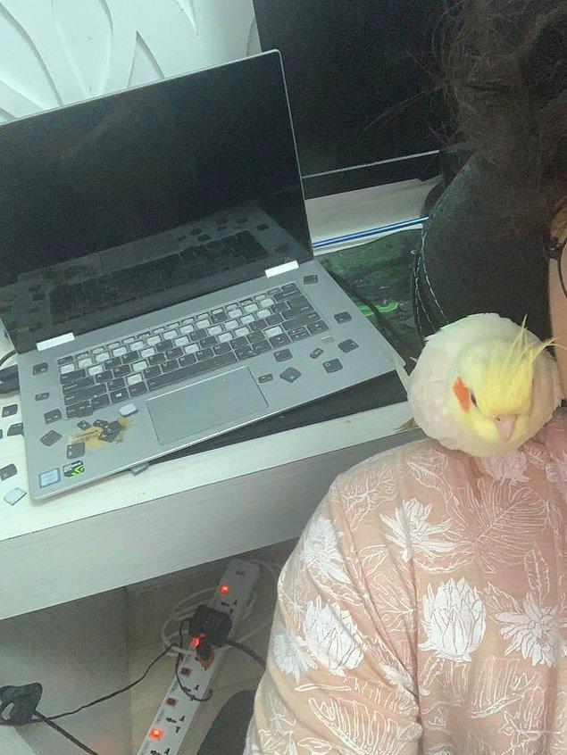 """10. """"Şu gördüğünüz kuş, arkada gördüğünüz klavyemi mahvetti."""""""