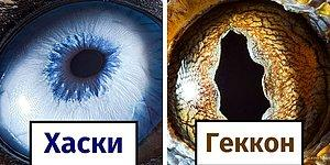 Армянский фотограф запечатлел, насколько уникальны глаза животных (24 фото)