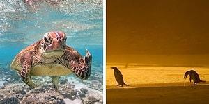 30 самых смешных фотографий дикой природы от финалистов конкурса Comedy Wildlife Photography Awards