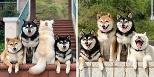 Собачка Хина постоянно портит групповые фотографии, и это выглядит очень смешно