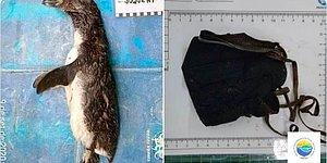 В Бразилии в желудке найденного мертвым пингвина нашли маску N95