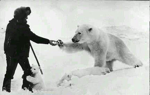 4. Yiyecek bulamayan anne kutup ayısına çevrede yaşayan yardımsever insanlar süt veriyor.