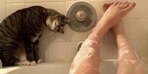 25 бесстыжих кошек, не уважающих личное пространство людей (Часть1)