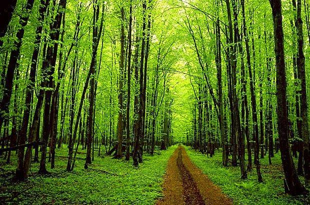 Ağaçlar, doğa ve ben!