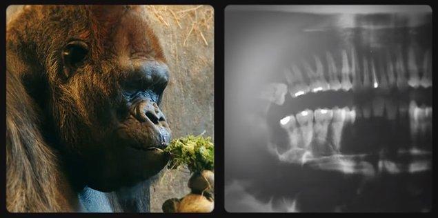 Vücudunuzun adeta bir doğal tarih müzesi olduğunu hiç fark ettiniz mi?