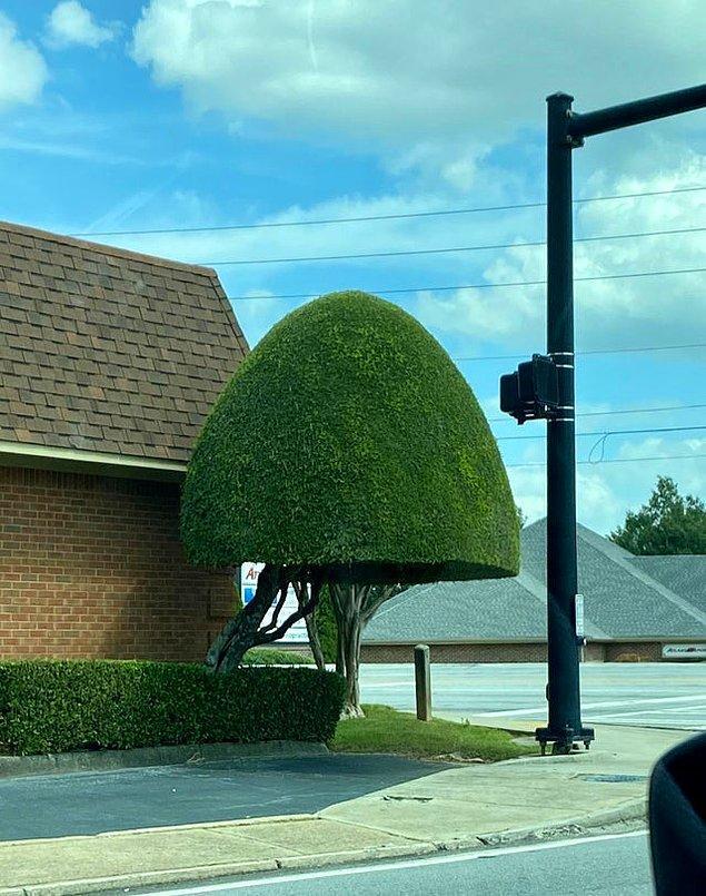 """16. """"Pürüzsüz kesilmiş bir ağaç."""""""