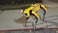 На улицах Онтарио была замеченная собака-робот от компании Boston Dynamics