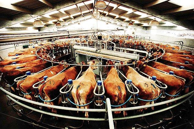 8. Hayvanlara en ufak hareket edebilecekleri bir alan bile verilmiyor...