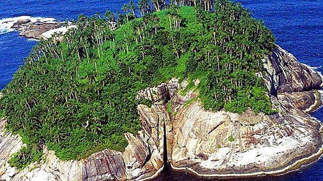 7. Yılan Adası - Brezilya