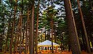 Крупнейший в мире хедж-фонд работает в палатках в лесу во время пандемии COVID