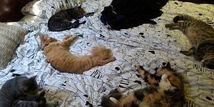 """16 фото, где запечатлена """"беспардонная наглость"""" котов и собак, занявших места людей :)"""