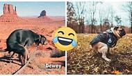 """В процессе: Календарь """"Какающие собаки 2021"""" достойно соревнуется с австралийскими пожарными (и, похоже, побеждает!)"""
