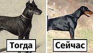 18 самых популярных пород собак 100 лет назад и сегодня
