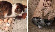 25 самых смешных случаев с кошками, которые спят где угодно, но только не там, где нужно