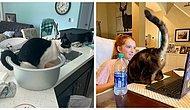 25 доказательств, что коты - бессовестные засранцы, у которых нет ни капли сострадания к своим владельцам (Часть 1, эпическая)