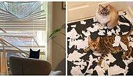 25 доказательств того, что коты - бессовестные засранцы, у которых нет ни капли сострадания к своим владельцам (Часть 3, уморительная)