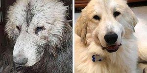 Владельцы домашних животных делятся историей того, как сильно изменились их питомцы с первой встречи