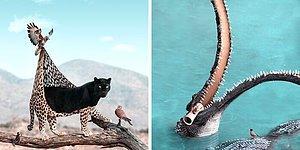 Вот что я представляю, чем занимаются животные, когда мы не смотрим (20 фото)