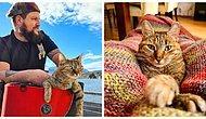 Шотландец в гордом одиночестве захотел объехать всю Европу на байке, но у полосатого бездомного кота были другие планы (30 фото)