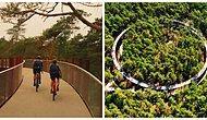 Это вам не велотренажер в качалке: В Бельгии можно покататься на двухуровневой велодорожке на высоте 10 метров прямо в лесу (12 фото)