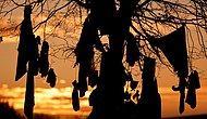 """Языческий обычай через призму COVID-19: Во Франции на """"целебные"""" деревья теперь привязывают не носки, а медицинские маски"""