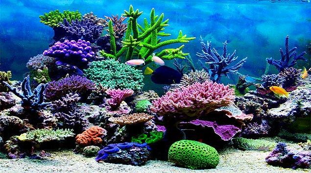 6. Chasing Coral