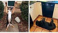 """""""Что не так с моим псом?!"""": Пользователи Reddit делятся смешными фото своих собак, которые, кажется, сломались (Часть 1)"""