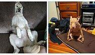 """""""Что не так с моим псом?!"""": Пользователи Reddit делятся смешными фото своих собак, которые, кажется, сломались (Часть 2)"""