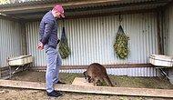 Исследования показали, что кенгуру могут общаться с людьми