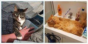 18 нахальных котеек, которые захватили власть в доме своих хозяев (то есть своих человеческих слуг)
