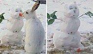 Видео, на котором кролик ест морковный нос снеговика, становится невероятно популярным в Сети