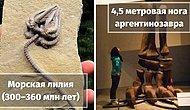 """15 самых удивительных окаменелостей эпохи динозавров, найденных археологами, которые заставят вас сказать """"Ух,ты!"""""""