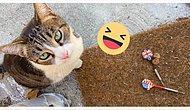 """Знакомьтесь с Чайной - кошкой-клептоманкой, которая собирает """"трофеи"""" для своей хозяйки по всем соседям вокруг (18 фото)"""