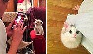 Настоящие супермодели: 15 фотографий кошек, которые точно знают, как принять правильную позу на фото