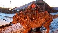 Россиянин задушил разъяренного волка голыми руками после того, как зверь убил двух собак и напал на его лошадь