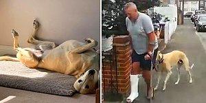 Мужчина на костылях потратил 300 фунтов стерлингов на ветеринара, чтобы выяснить причину хромоты своего пса и узнает, что тот просто копирует его