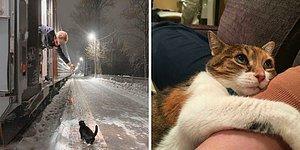 15 самых милых постов о кошках, которые согреют ваши сердца