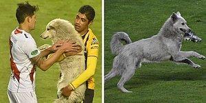 Во время матча в Боливии, бездомный пес выбежал на поле и украл бутсу футболиста, что и помогло ему найти дом