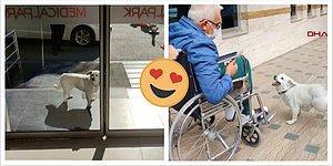 Турецкий пес Бонджук преданно ждал своего хозяина у входа больницы целых 6 дней...и дождался!