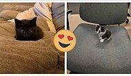 Что может быть лучше онлайн-сообщества, где выкладывают фото неприлично маленьких и ужасно трогательных котят? (17 фото)